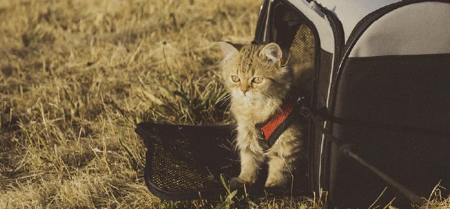 Gato con Guacal